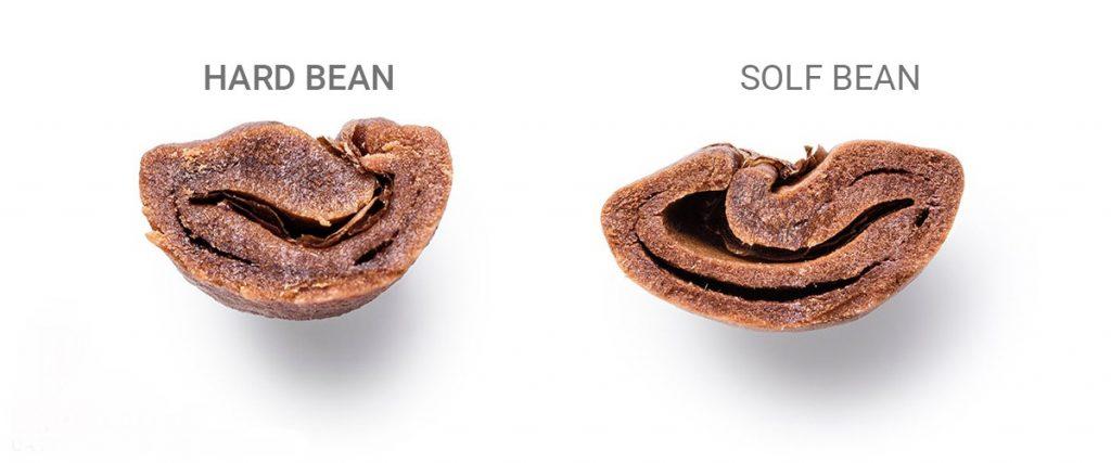 Nhận biết độ cao của cà phê nhờ cấu trúc hạt